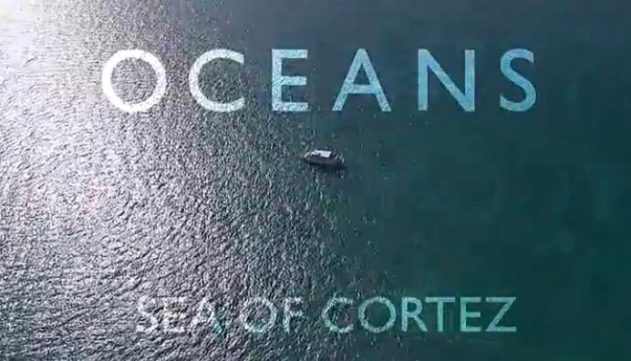 少儿英语学习资源分享 《BBC海洋系列》1-8季快来领取