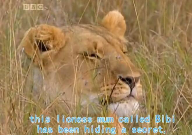 最佳儿童动画片 BBC儿童动物世界纪录片资源分享合集下载!
