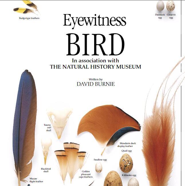 DK百科全书出品《Bird》—— eyewitness系列高清科普绘本资源下载