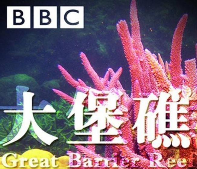 BBC纪录片《大堡礁》1-3集,解密巨大的生态网络百度网盘下载