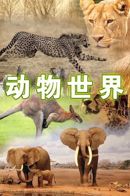 BBC纪录片《少儿动物世界 Wild Tales》第一季5集资源大全