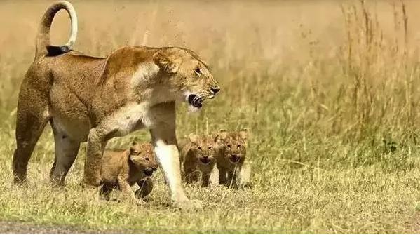 【免费领取】BBC《少儿动物世界 Wild Tales》第四季值得入手!