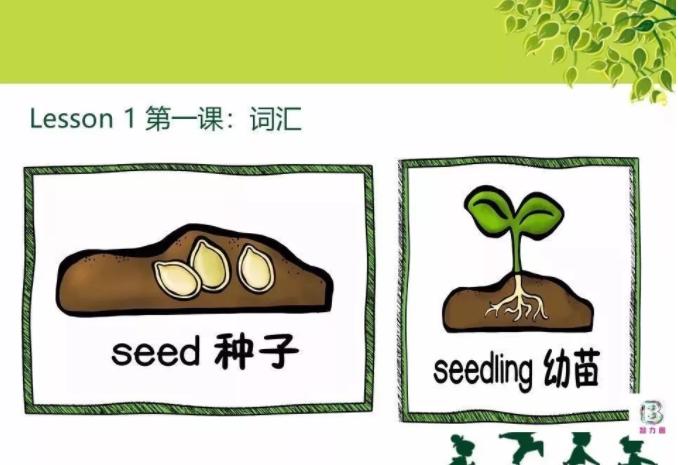美国小学科学艺术课: 植物的一生 (10个视频MP4+练习册PDF)免费资料